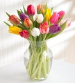 Mixed Tulip in a Vase